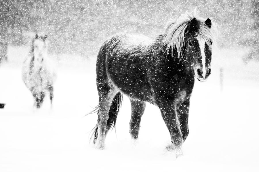 Horse Photograph - Snow Dance by Mark Courage