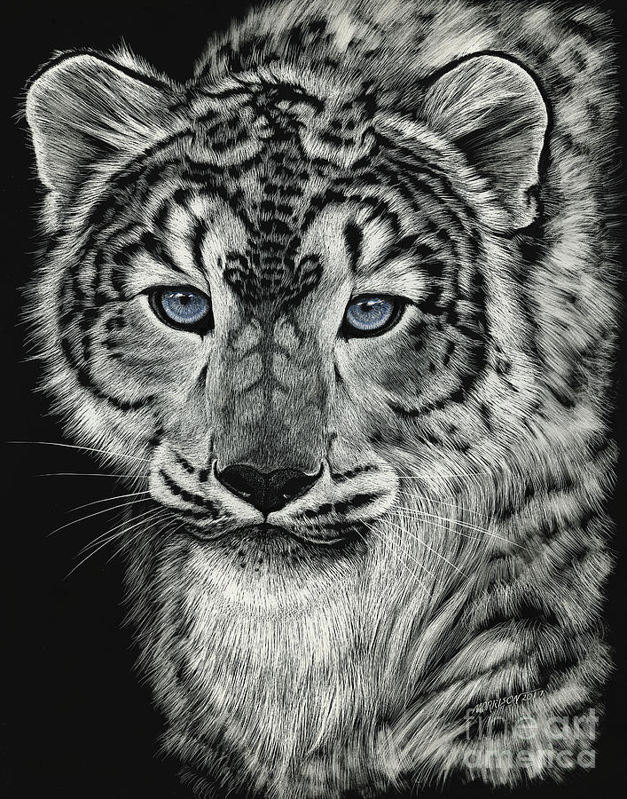 Snow Leopard Drawing - Snow Dragon Leopard by Stanley Morrison