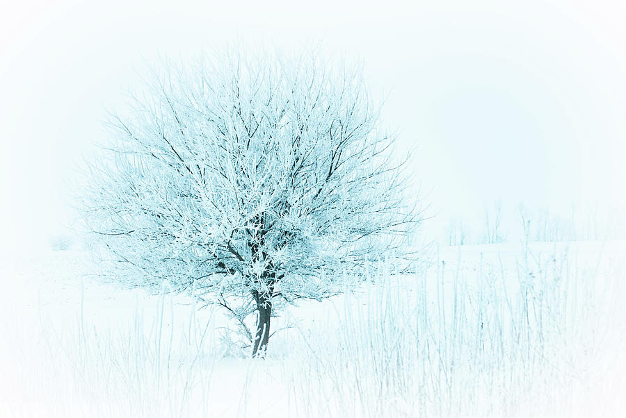 Snow Field Tree by Troy Stapek