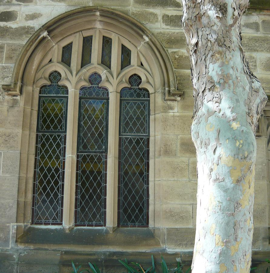 Snow Gum And St Andrews Cathedral Photograph by Adrianne Wood