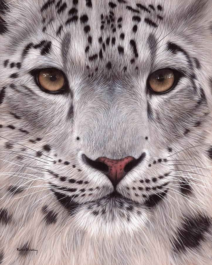 Snow Leopard Face Painting By Rachel Stribbling