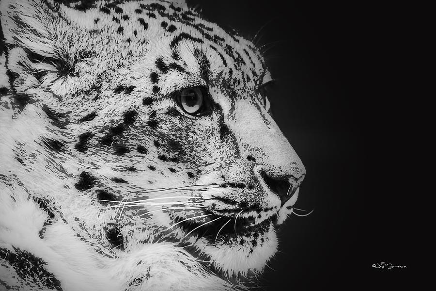 Snow Leopard Photograph - Snow Leopard by Jeff Swanson