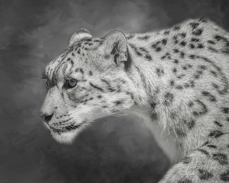 Snow Leopard by Nicole Wilde
