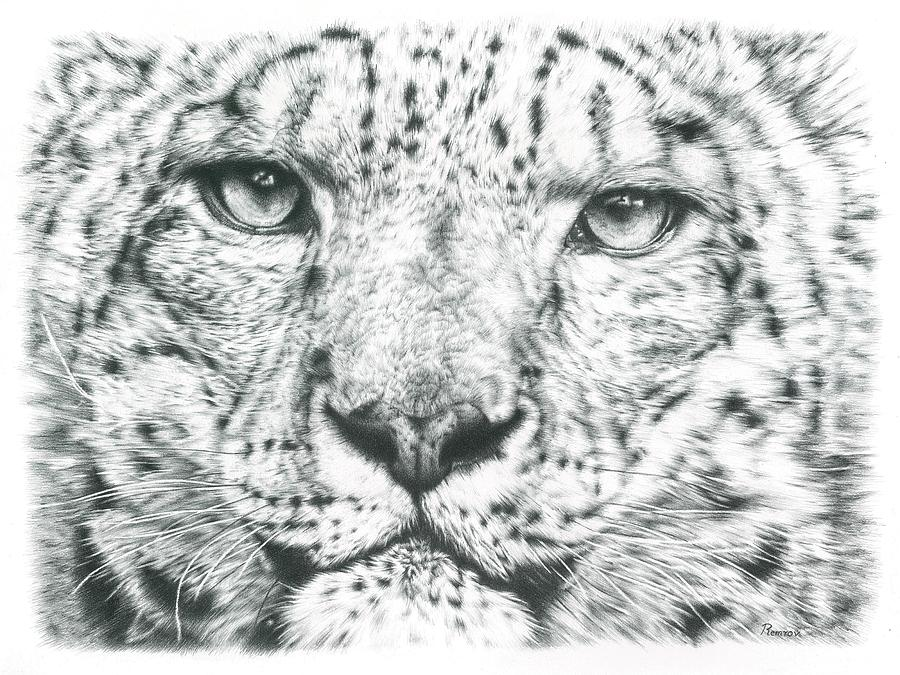 Snow Leopard  by Remrov