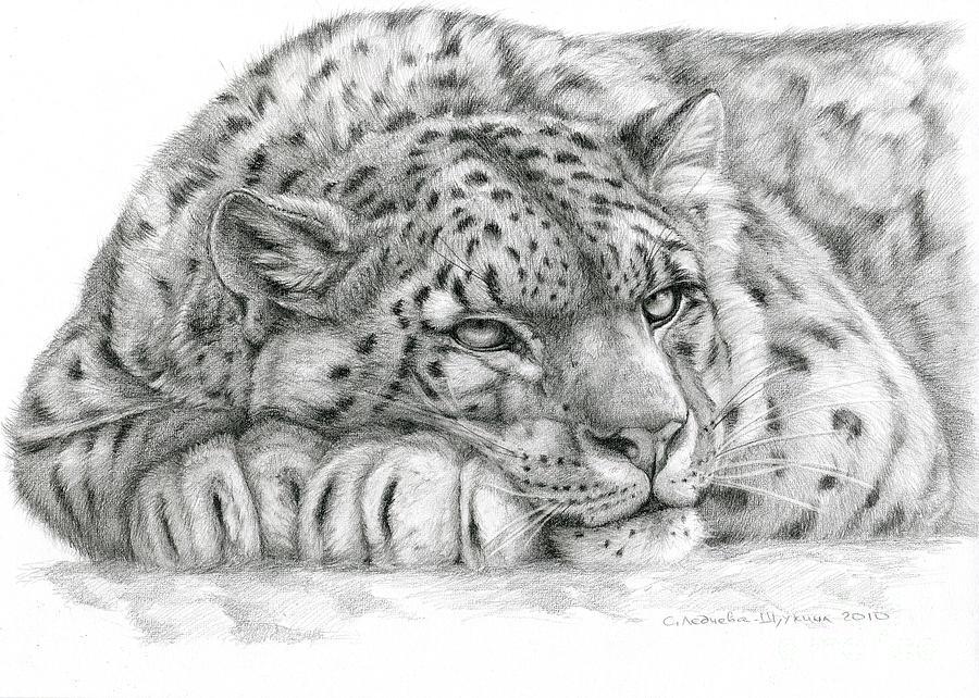 Cat Drawing - Snow Leopard by Svetlana Ledneva-Schukina