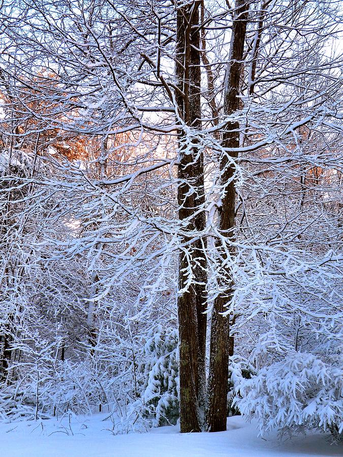 Snow Photograph - Snow Maple Morning by Dave Martsolf