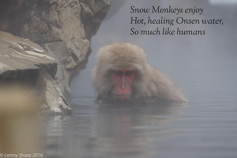 Japan Photograph - Snow Monkey Onsen - Haiku by Leonard Sharp