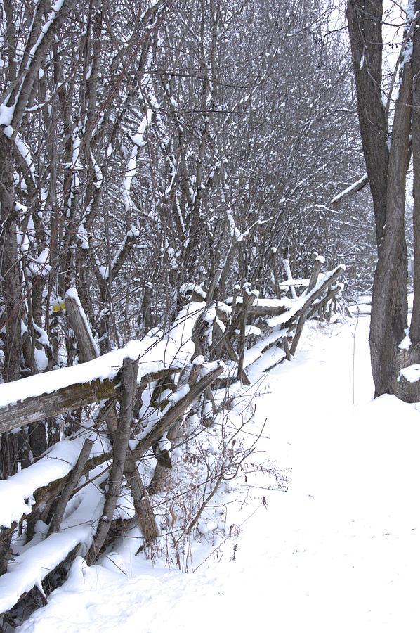 Snow on a Cedar Fence by Valerie Kirkwood