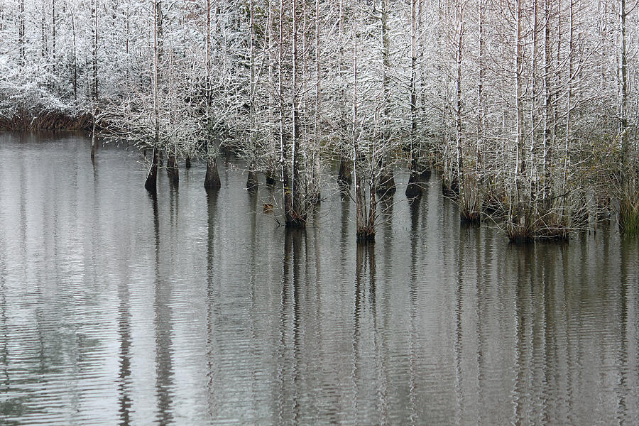 Cypress Photograph - Snow On The Cypresses by Suzanne Gaff