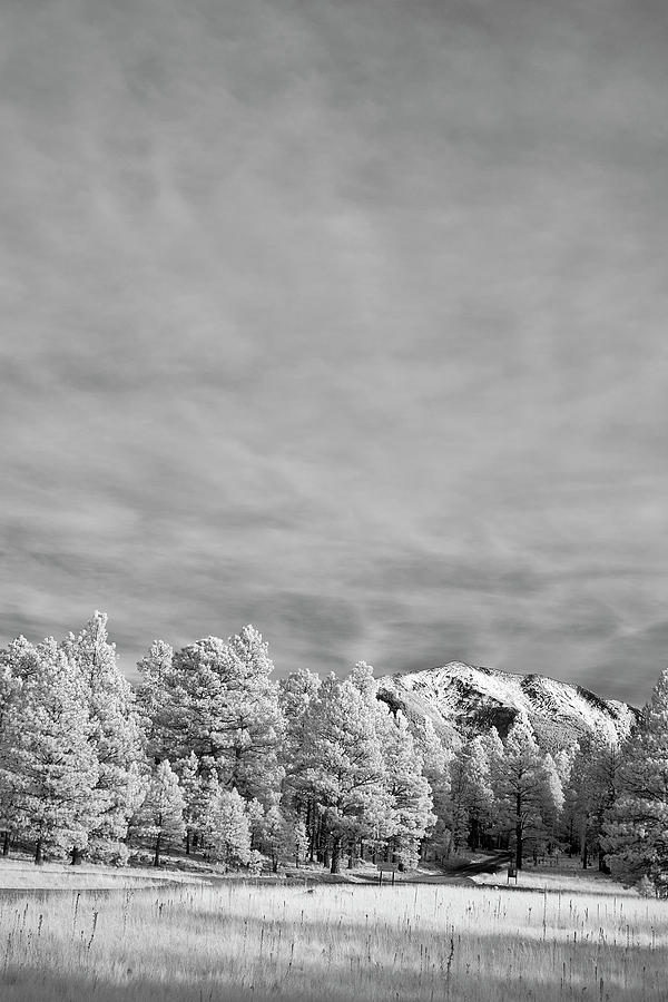 Jon Glaser Photograph - Snow On The Mountain In Flagstaff by Jon Glaser