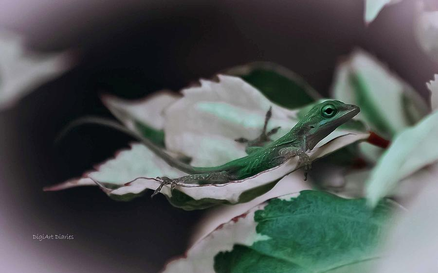Lizard Photograph - Snow Queen Hammock by DigiArt Diaries by Vicky B Fuller