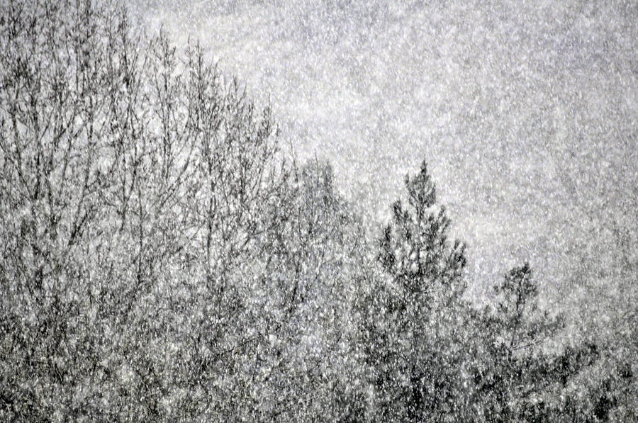 Winter Photograph - Snow Squawl by Laura Mountainspring