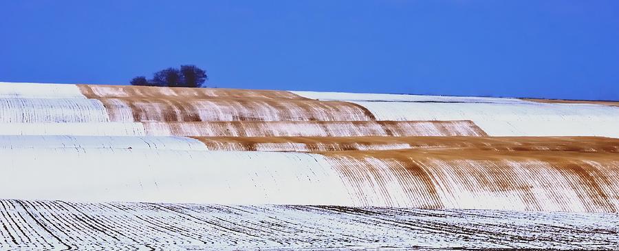 Snow Stubble Tree Line 13955 Photograph