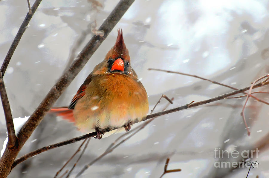 Bird Photograph - Snow Surprise by Lois Bryan
