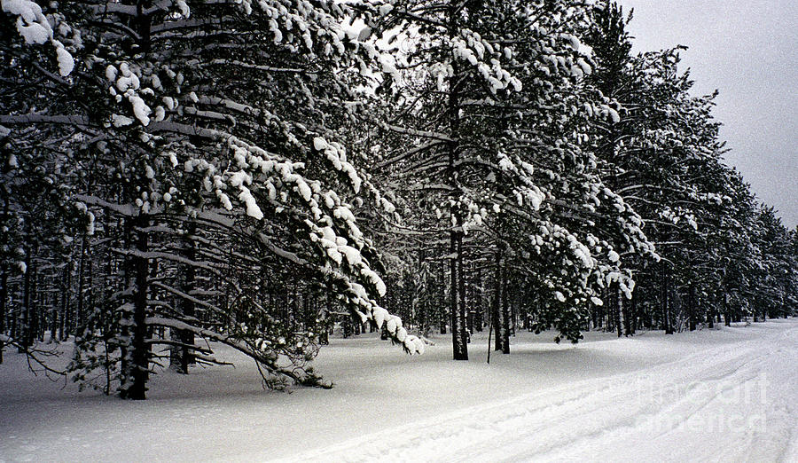 Upper Peninsula Photograph - Snow Trail by Cathy Weaver