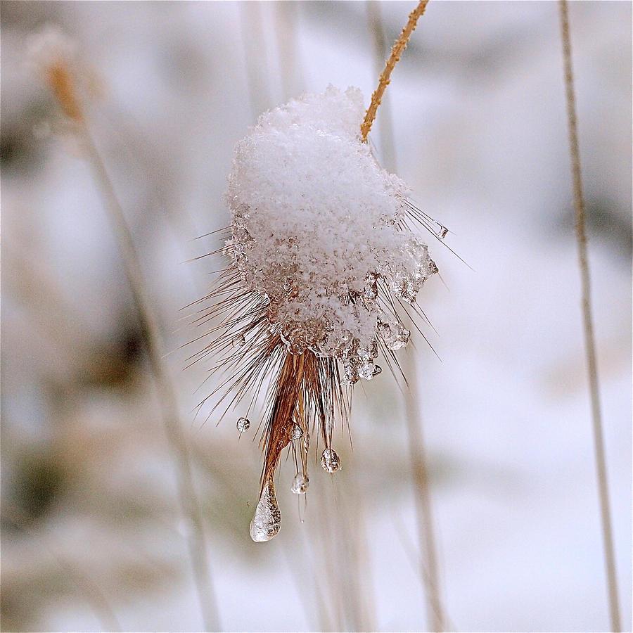 Snow Photograph - Snow Transfiguration by Rona Black