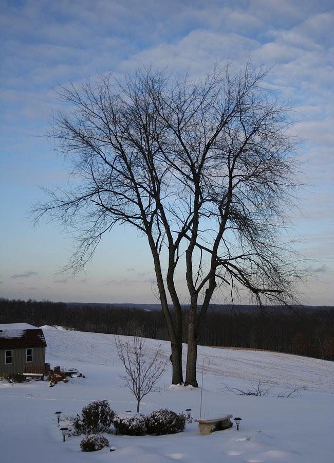 Snow Tree Photograph by Joe Davidson