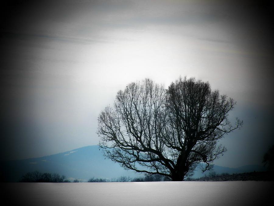 Virginia Photograph - Snow Tree by Joyce Kimble Smith