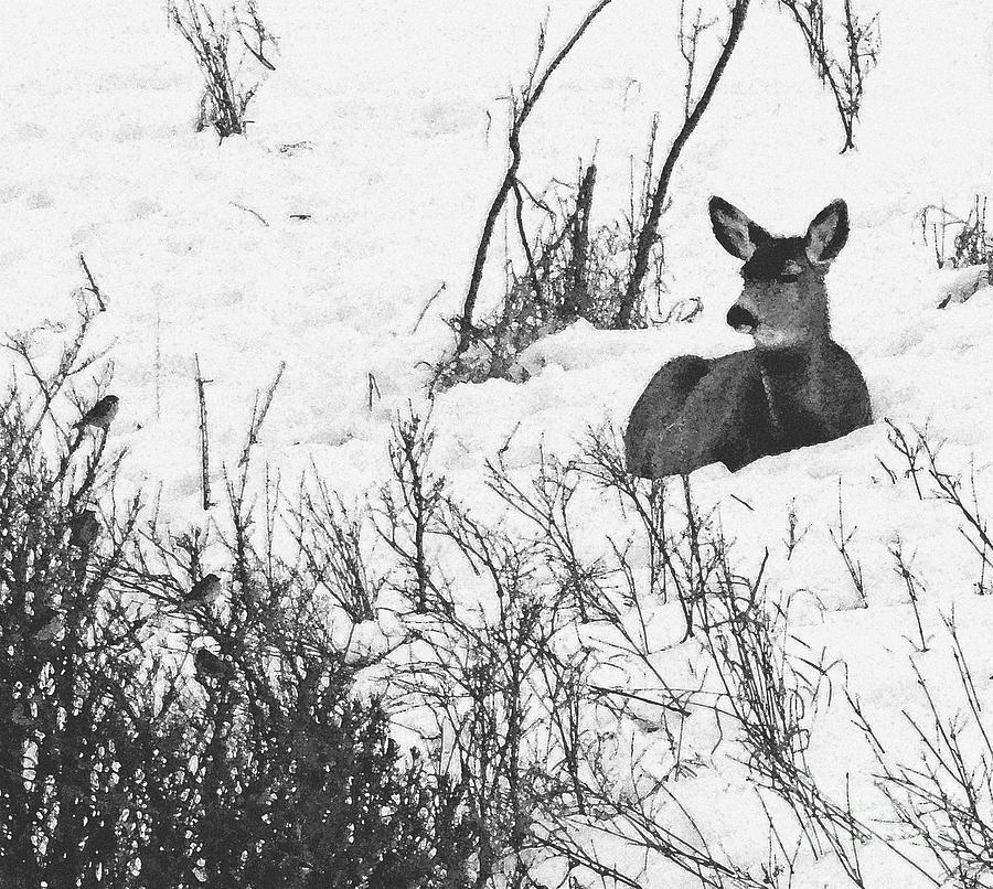Alberta Photograph - Snow White And Friends by Al Bourassa