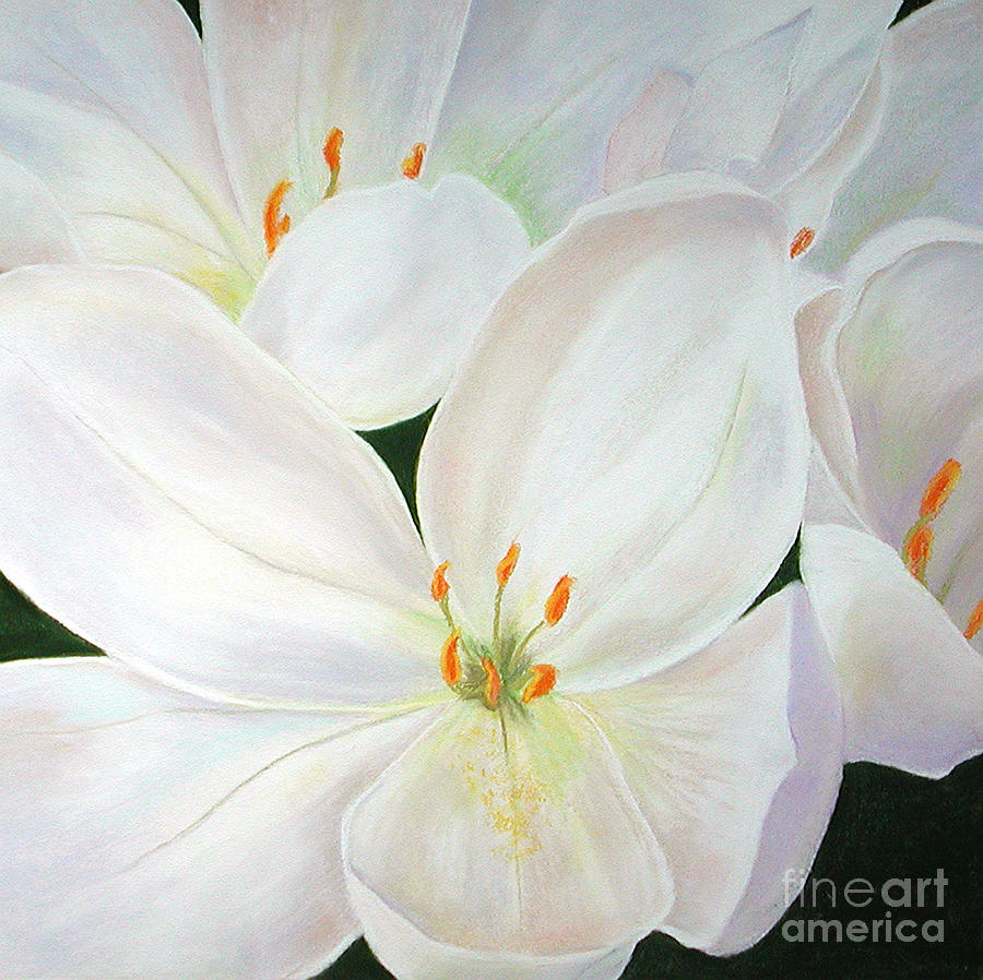White Blooms Pastel - Snow White by Lucinda  Hansen