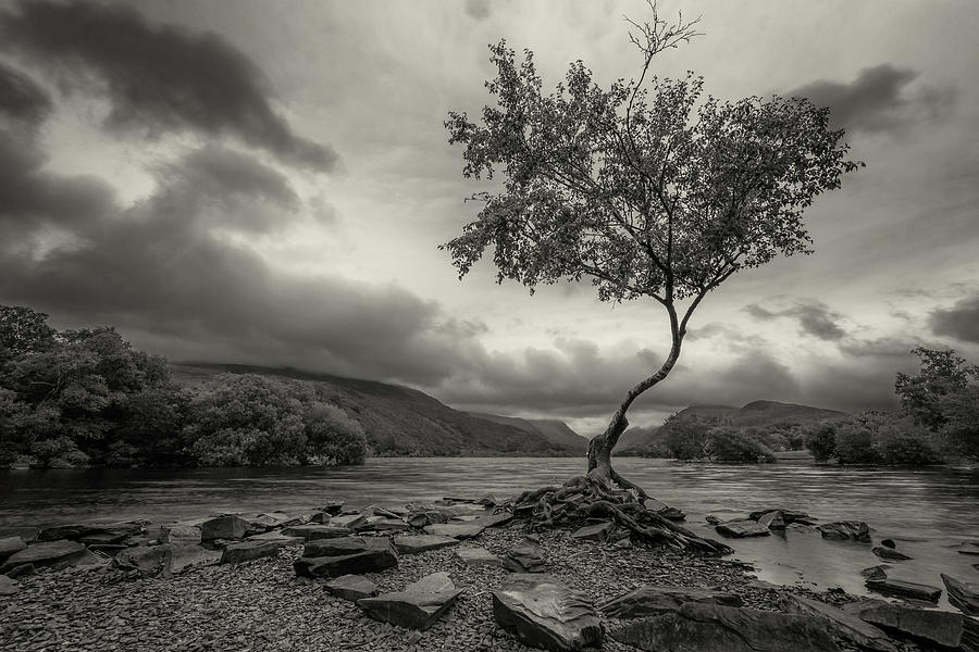 Snowdonia Wales The Lonely Tree by John Williams