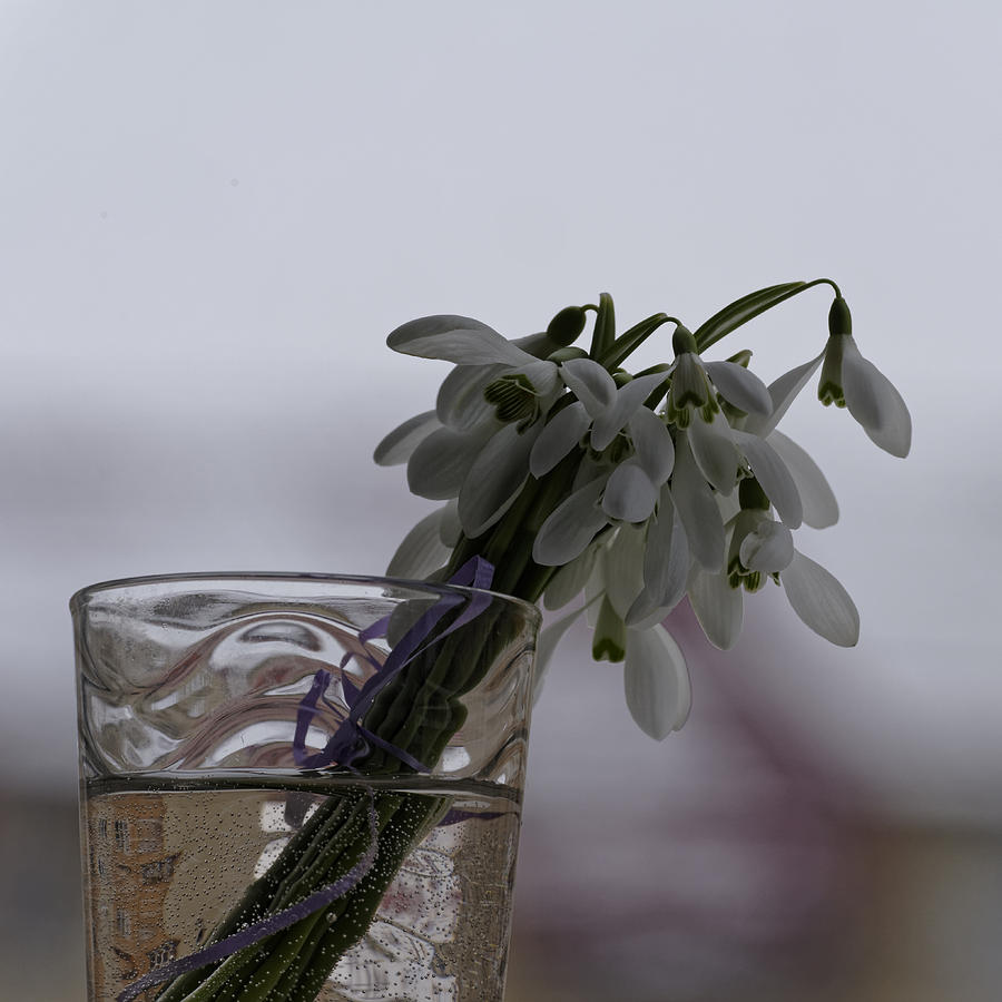 Arrangement Photograph - Snowdrops Bouquet In The Glass by Adrian Bud