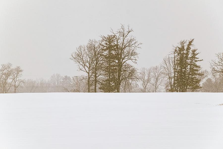 Snowfall - by Julie Weber
