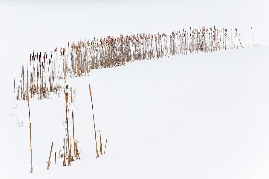 Snowfield 2 - by Julie Weber