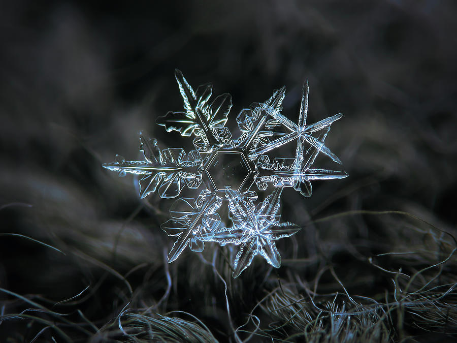 Snowflake Photograph - Snowflake Of 19 March 2013 by Alexey Kljatov