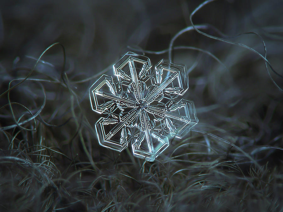Snowflake Photograph - Snowflake Photo - Alcor by Alexey Kljatov