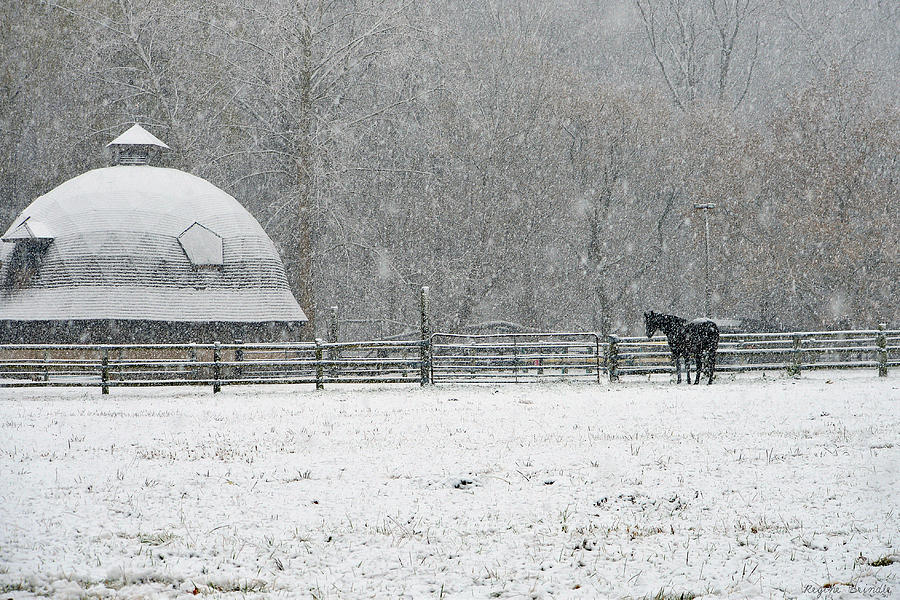 Horses Photograph - Snowing At The Round Barn by Regine Brindle