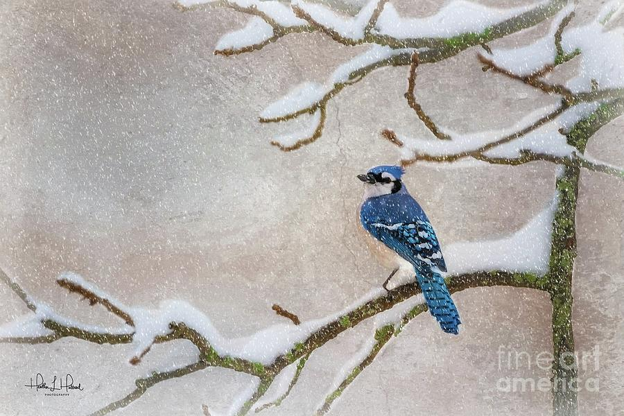 Snowing Blue Photograph by Heather Hubbard