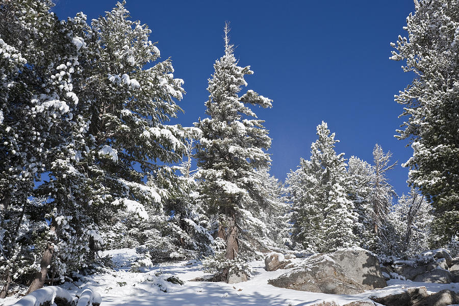 Winter Photograph - Snowscape 2 by Kelley King