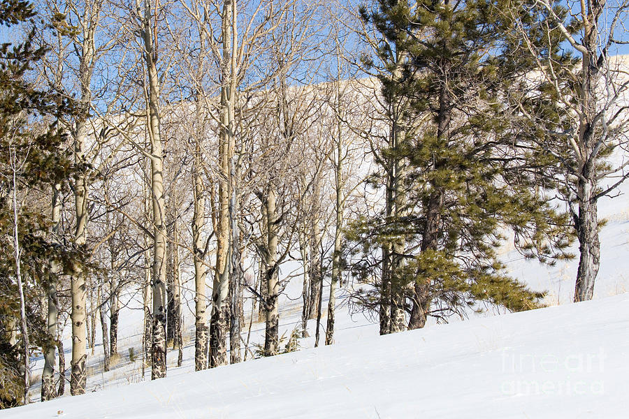 Snowshoe Trail In The Colorado Rocky Mountains Photograph