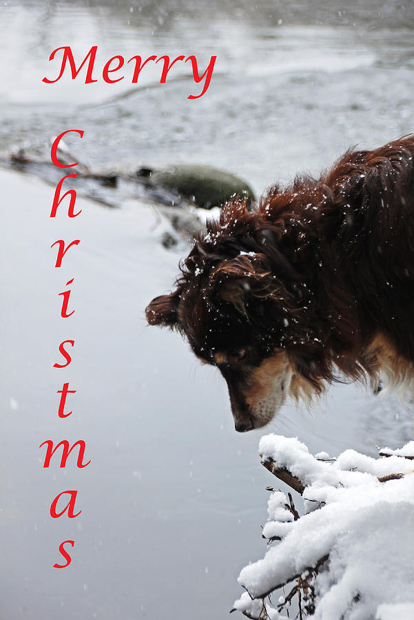 Snowy Aussie - Merry Christmas Photograph by Debbie Oppermann