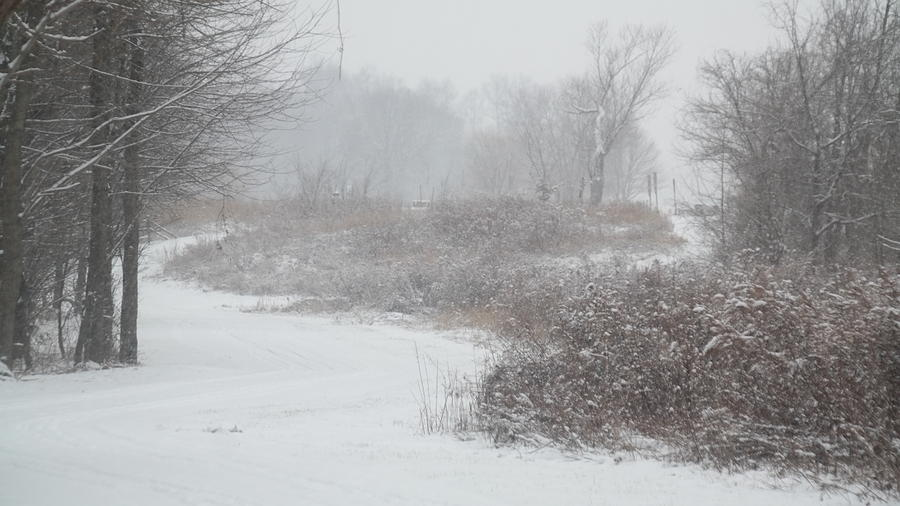 Snow Photograph - Snowy Day on the Trail by Bill Helman