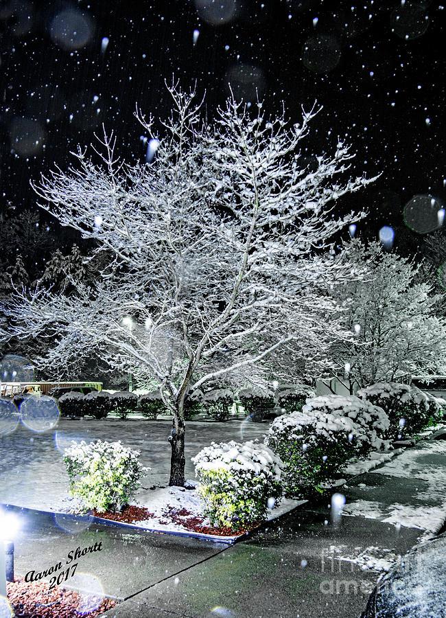 Tree Photograph - Snowy Dogwood Tree At Night by Aaron Shortt