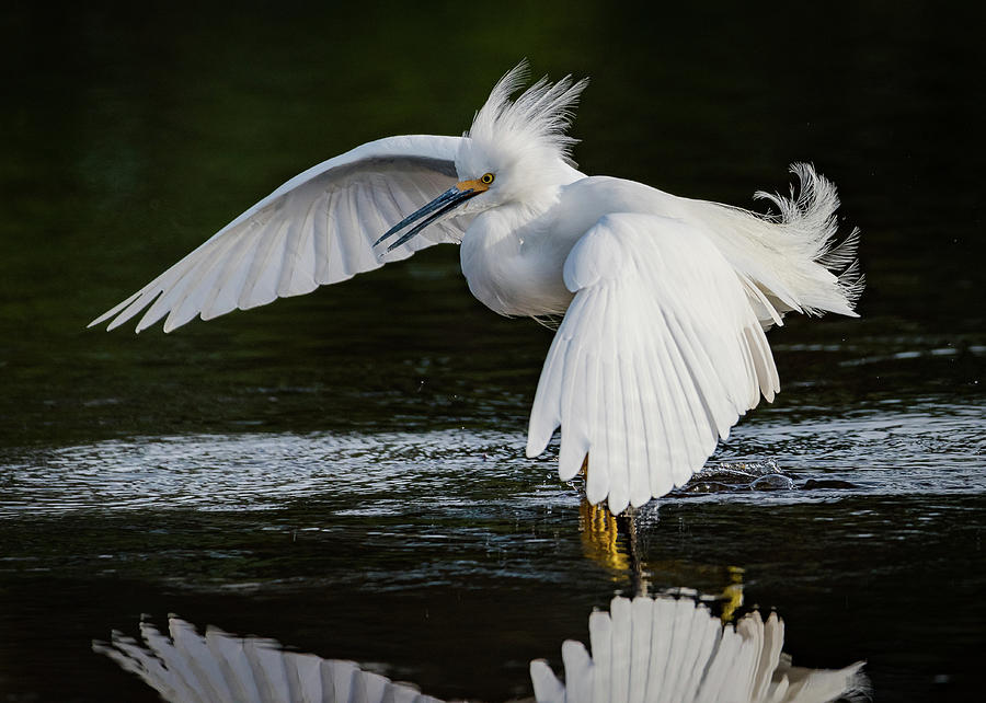 Birds Photograph - Snowy by Don Miller