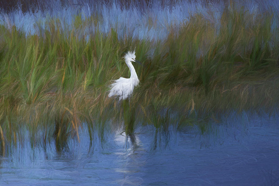 Snowy Egret by Dawn J Benko