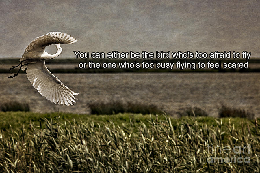 Bird Photograph - Snowy Egret Inspirational Quote by Tom Gari Gallery-Three-Photography