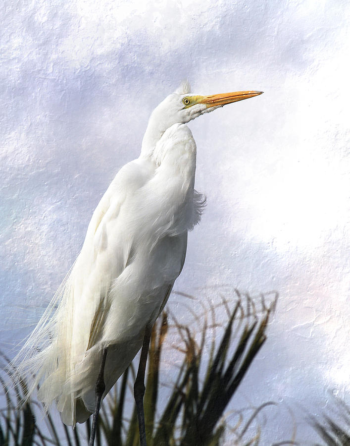 Snowy Egret by Michele A Loftus