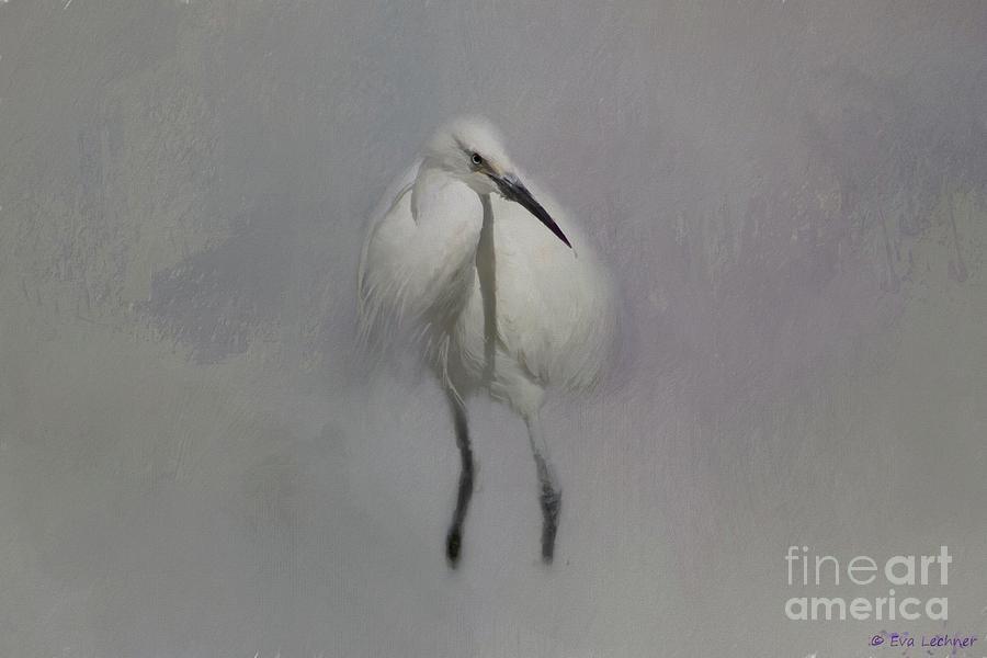 Snowy Egret Mixed Media - Snowy Elegance by Eva Lechner