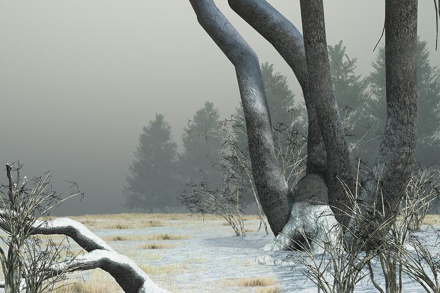 Winter Digital Art - Snowy Field by Mindscape Arts