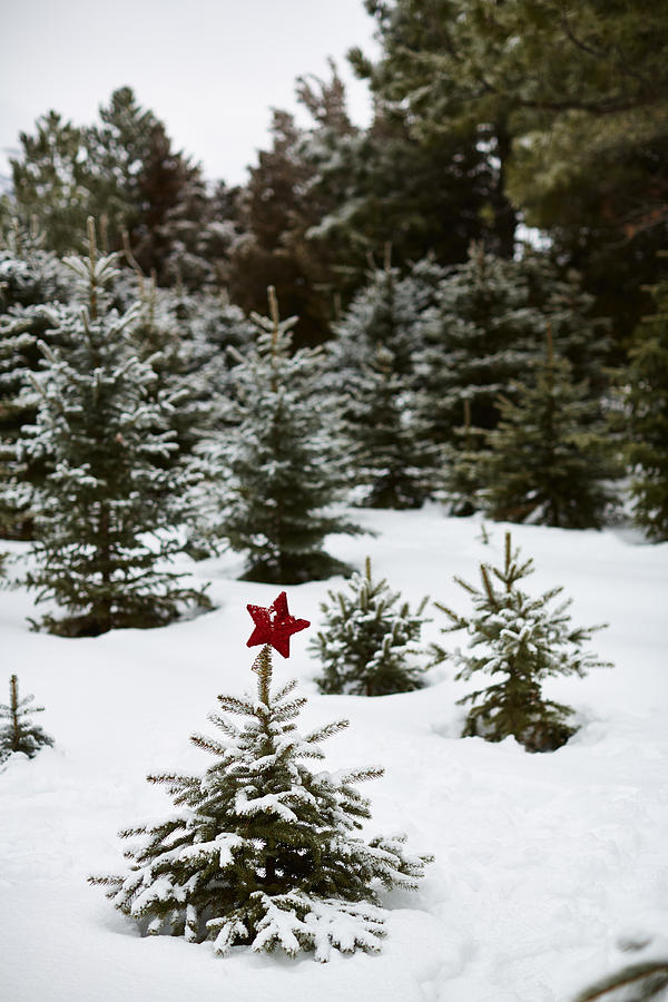 Branches Photograph - Snowy Forest And Small Tree In Front by Gillham Studios