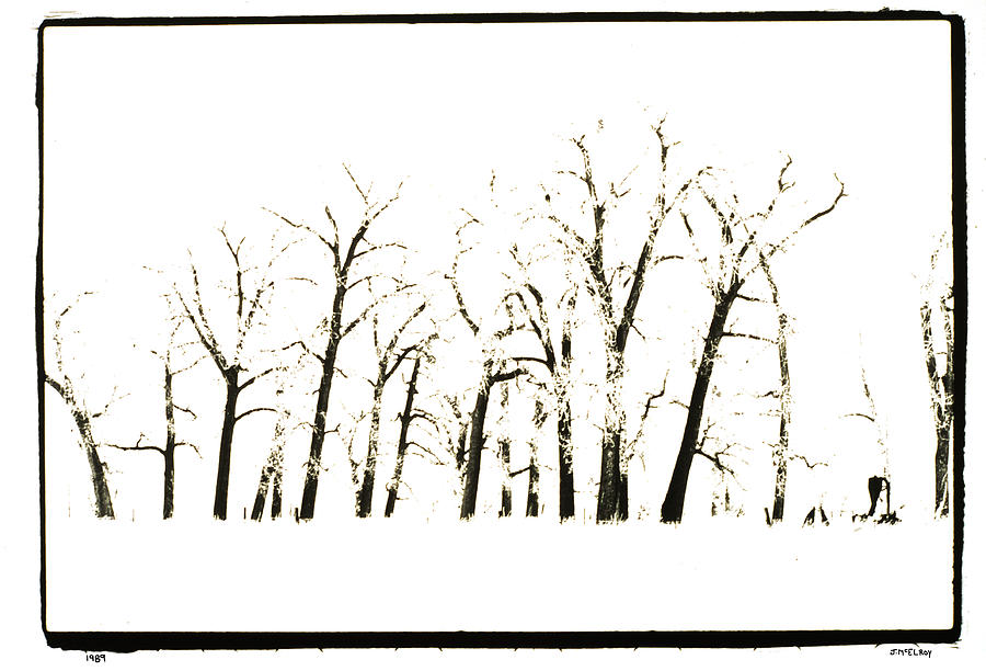 Snow Photograph - Snowy Line Up by Jerry McElroy