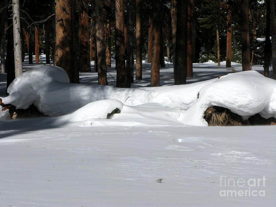 Snow Photograph - Snowy Log by PJ  Cloud