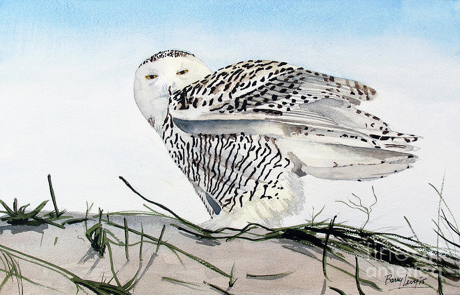 Snowy Owl Painting - Snowy Owl by Barry Levy