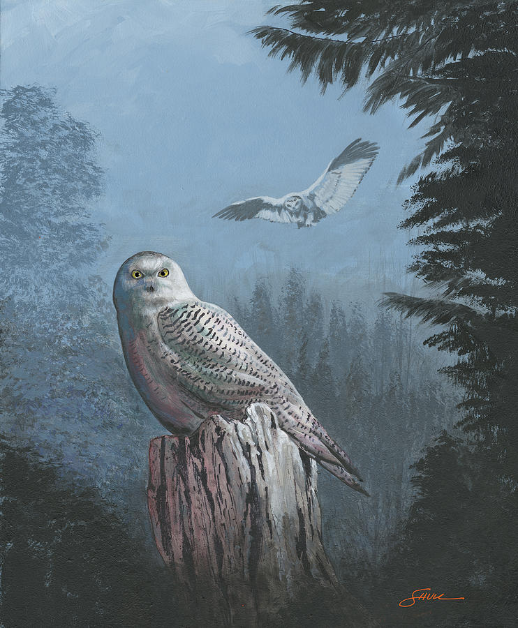 Snowy Owl Painting by Harold Shull