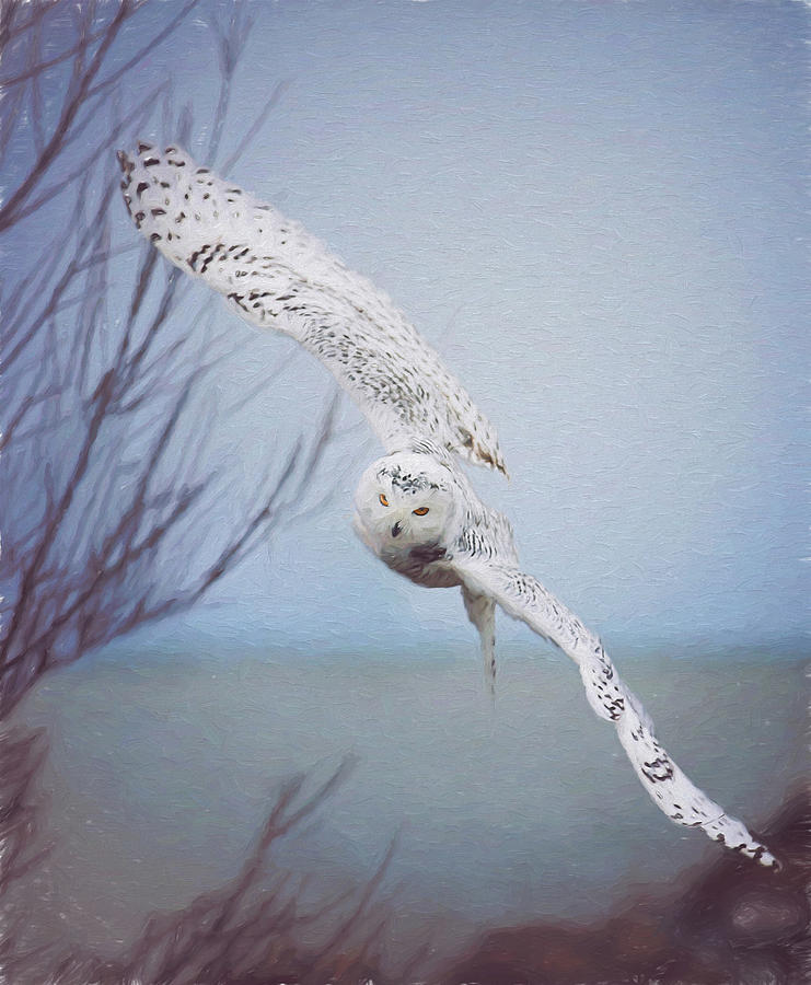 Wildlife Photograph - Snowy Owl In Flight Painting 1 by Carrie Ann Grippo-Pike