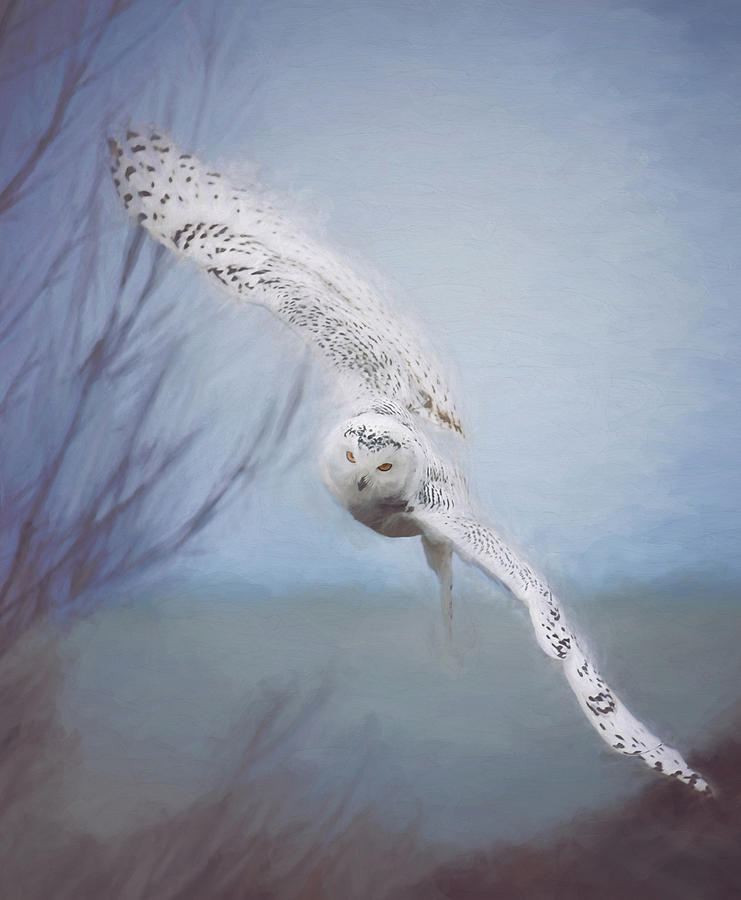 Wildlife Photograph - Snowy Owl In Flight Painting 2 by Carrie Ann Grippo-Pike